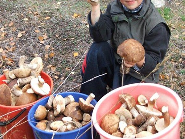 В Ростовской области пять человек отравились грибами, среди них – ребенок