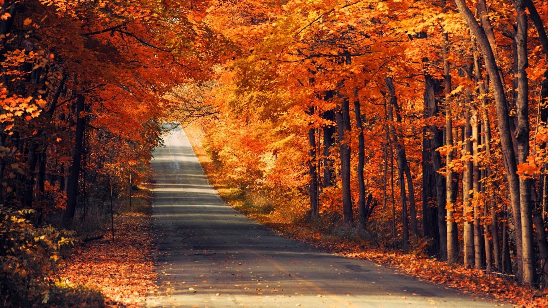 Какая будет осень? Прогнозы метеорологов и народные приметы на сентябрь